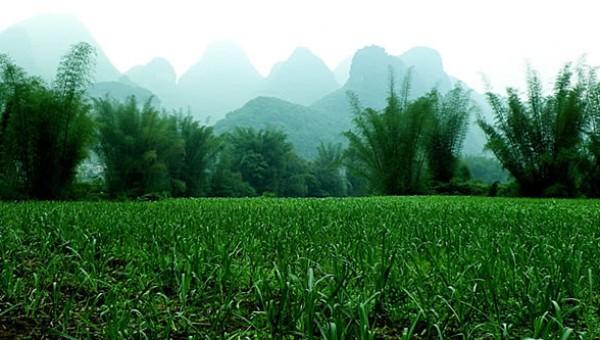 甘蔗种植技术专题