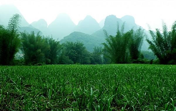 甘蔗种植制糖技术专题