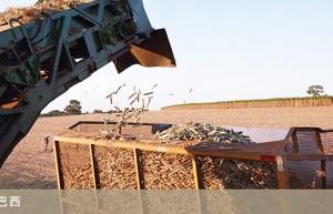 中粮集团计划投资巴西四家甘蔗乙醇糖厂