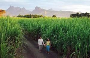 印度2019/20榨季产糖量或将下调至2600万吨 3年来新低