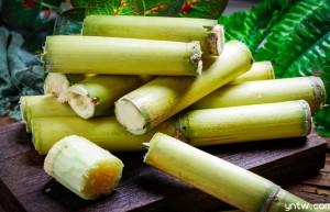 附加值高 认知度低 甘蔗多酚亟待开发