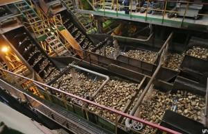 俄罗斯新榨季甜菜糖产量预估超600万吨 最近四个榨季统计