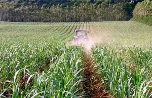 广西:耕耘甜蜜事业 助力脱贫攻坚 完成全区糖料蔗种植任务