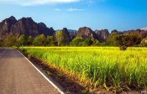 截至1月底泰国产糖530万吨 同比减12% 预估减产将创九年新低