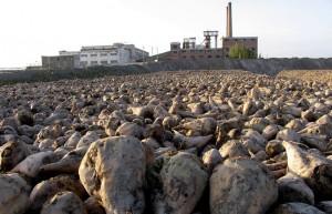 绿原糖业拟收购恒丰糖业51%股权 布局南疆甜菜制糖产业