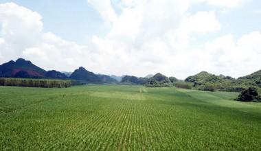 截至8月底广西食糖产销率87% 单月销糖同比增5.6万吨
