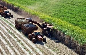 巴西能源消费明显下降 糖企选择多生产食糖 等待政府援助