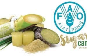联合国粮农组织食品价格指数9月份继续上扬 食糖价格指数同比上升42.2点