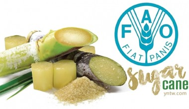 联合国粮农组织:食品价格指数一年来首次回落 糖价指数连涨 创多年新高