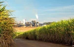 巴西主产区10月上半月产糖量预计大幅增长