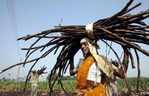 死磕国际低糖价 印度一面给制糖厂补贴一面提高甘蔗收购价