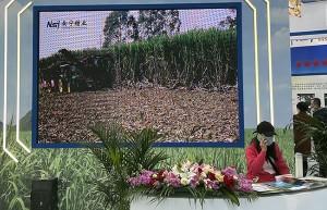 为偿还债务 南宁糖业拟向控股股东募资不超过6亿元