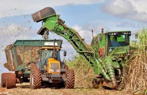 巴西食糖产量持续下降 市场或依赖印度填补缺口